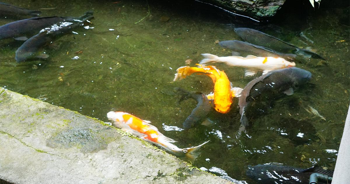 熊本県水俣市ゲストハウスtojiyaにある池
