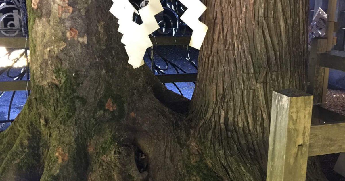 恋も仕事も縁が結ばれる!? 福井県大野市春日神社・良縁の樹に行ってきたよ!