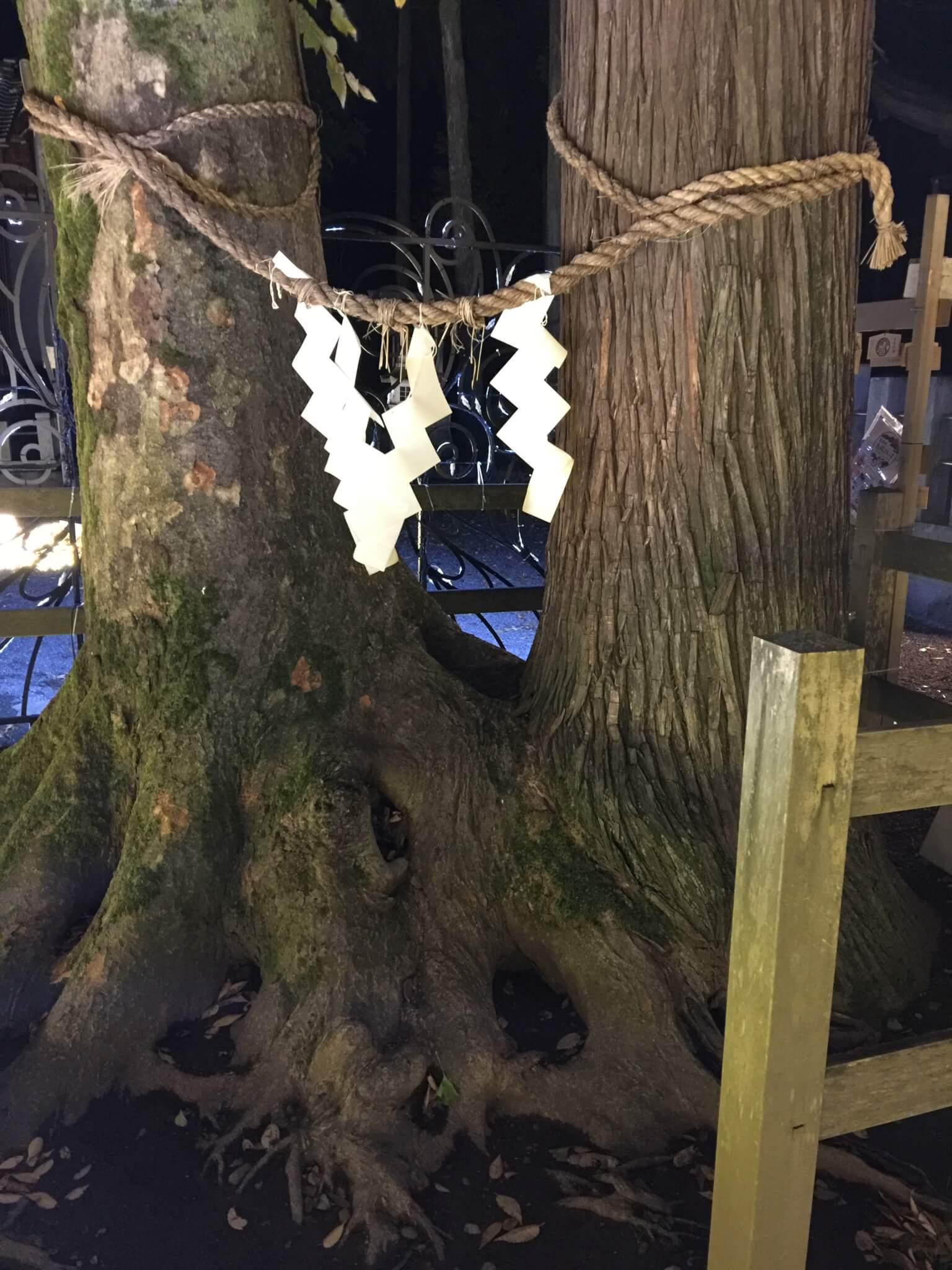 杉とケヤキが1つに重なる奇跡的な姿・良縁の樹