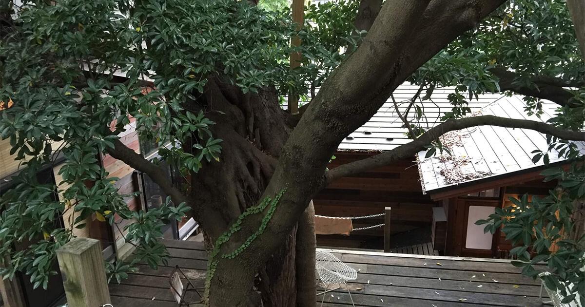 なんじゃもんじゃカフェの下はツリーハウス