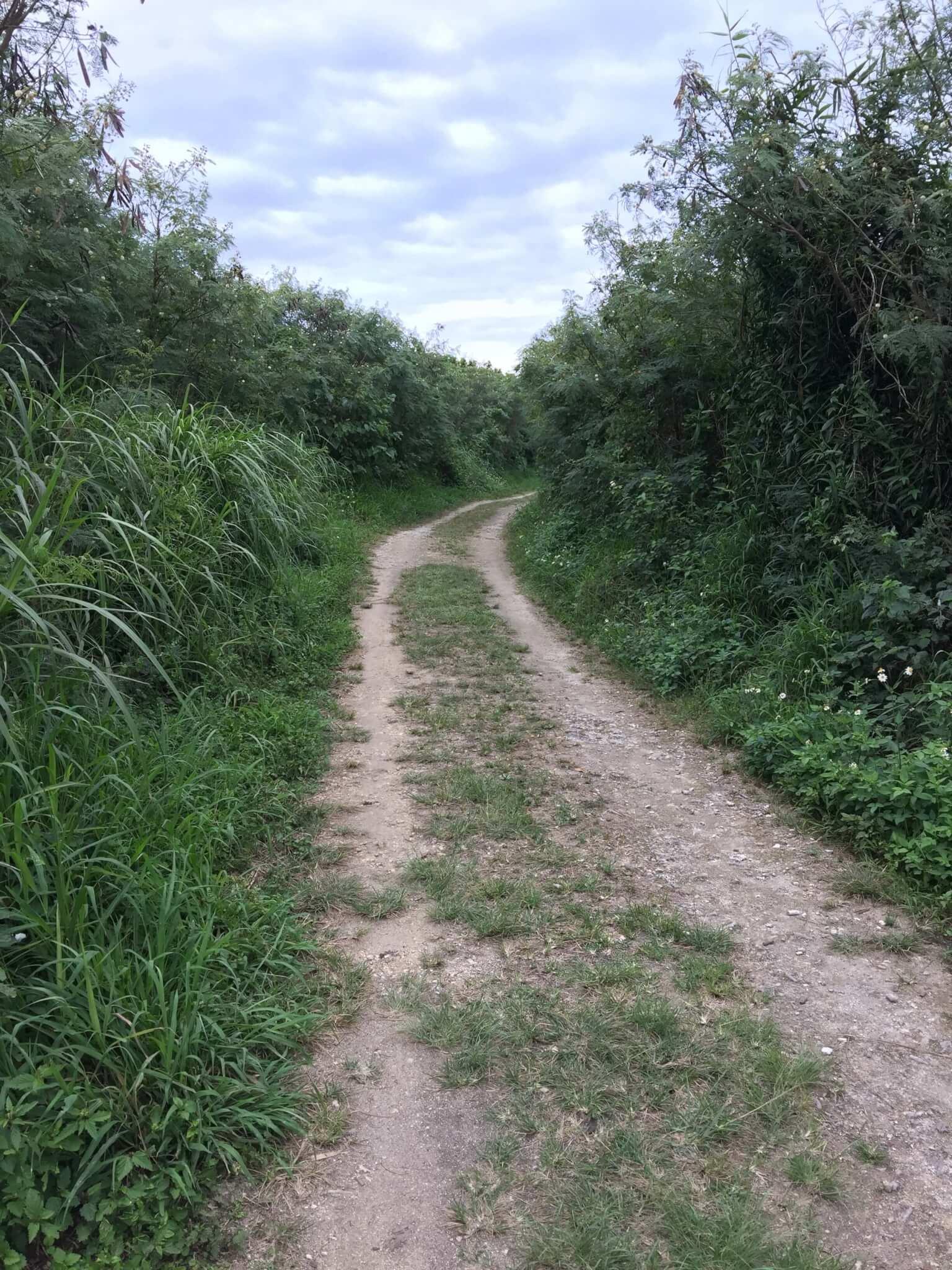 竹富島星のやからアイヤル浜へ続く道
